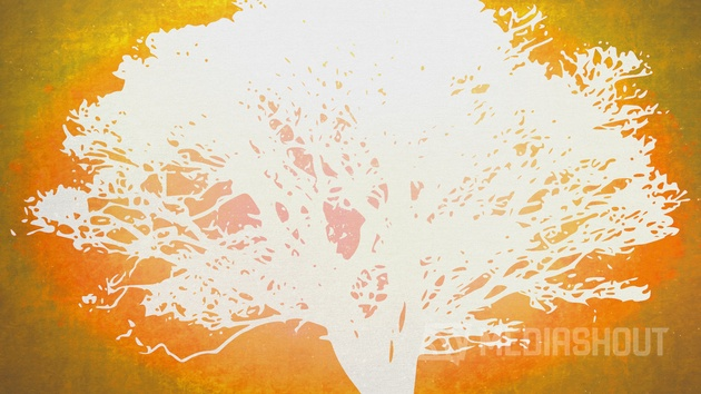 Tree of Life Orange 2